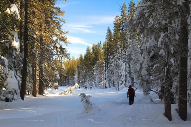 Yosemite-Snowshoe-10