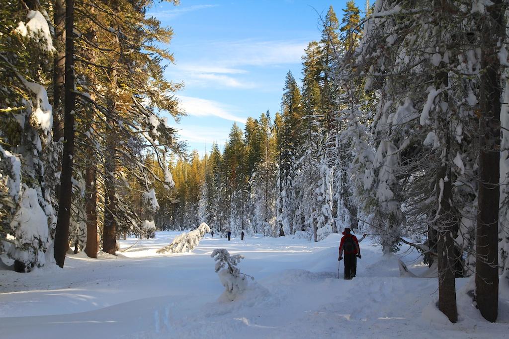 Snowshoeing Badger Pass To Dewey Point In Yosemite