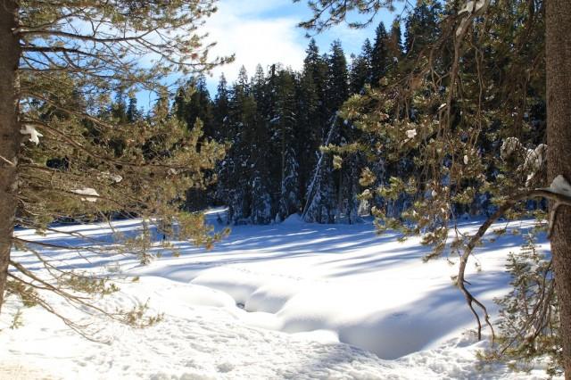 Yosemite-Snowshoe-11