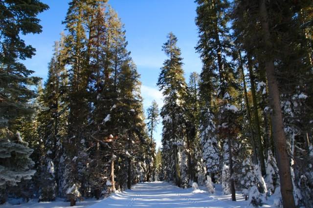 Yosemite-Snowshoe-4
