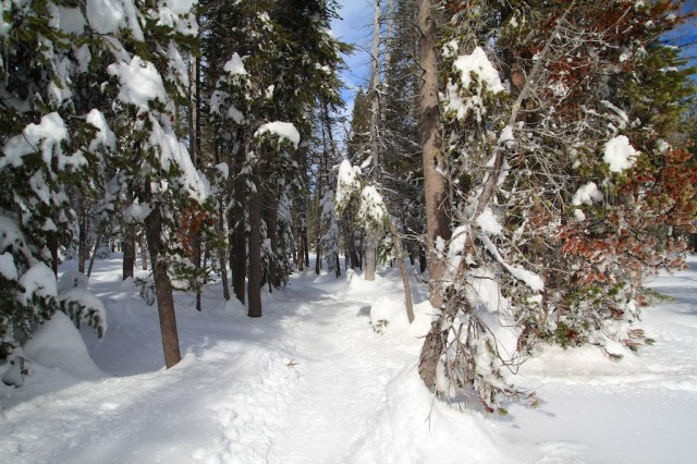 Yosemite-Snowshoe-7
