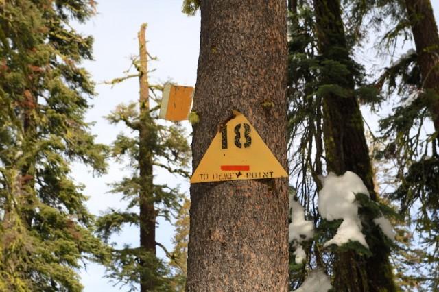 Yosemite-Snowshoe-8
