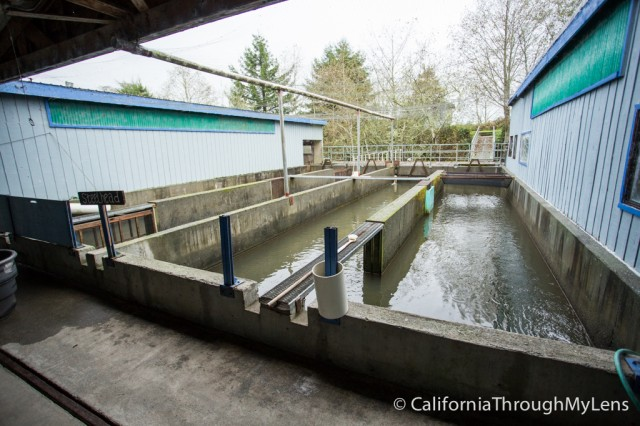 fish hatchery-1