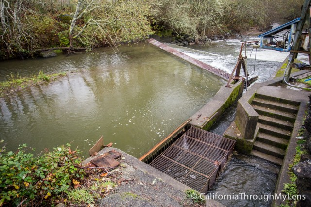 fish hatchery-5