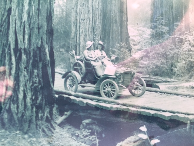 old redwoods pic