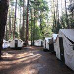 Half Dome Village (Curry Village) Review: Yosemite's Famous Canvas Tent Cabins
