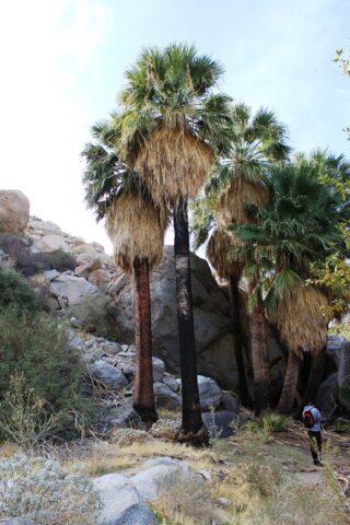 Hellhole Canyon 4