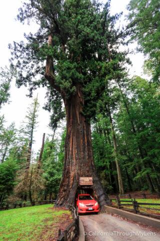 Legget drive thru tree-1