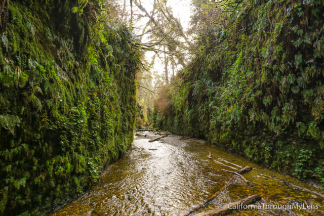 fern canyon-18