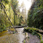 Fern Canyon: A Majestic Hike in Northern California