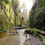 Fern Canyon: A Majestic Hike in Northern California