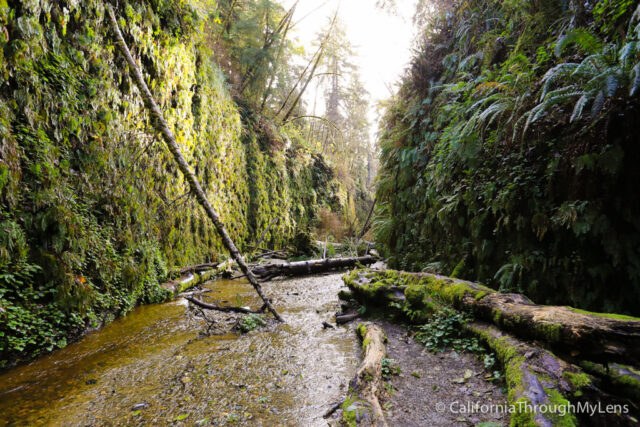 fern canyon-19