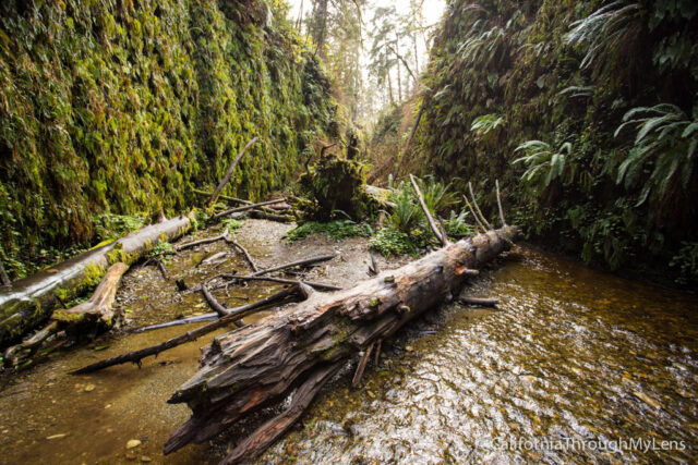 fern canyon-32