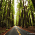 Avenue of the Giants: The 31 Mile Redwood Drive You Have to Do