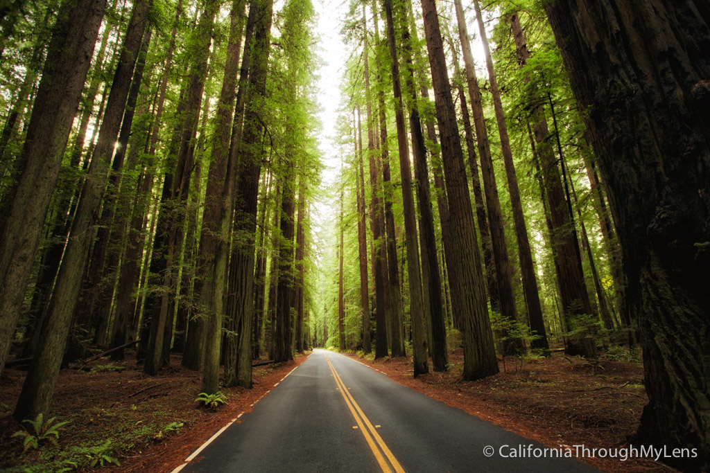 Avenue Of The Giants The 31 Mile Redwood Drive You Have