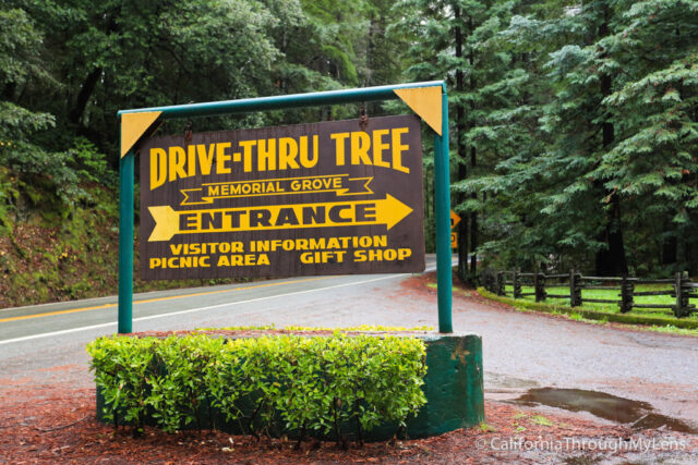Chandelier Drive Thru Tree-1