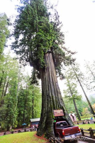 Chandelier Drive Thru Tree-2