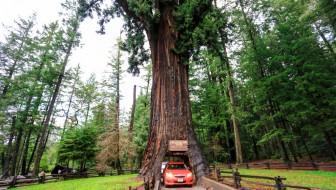 Chandelier Drive Thru Tree-7