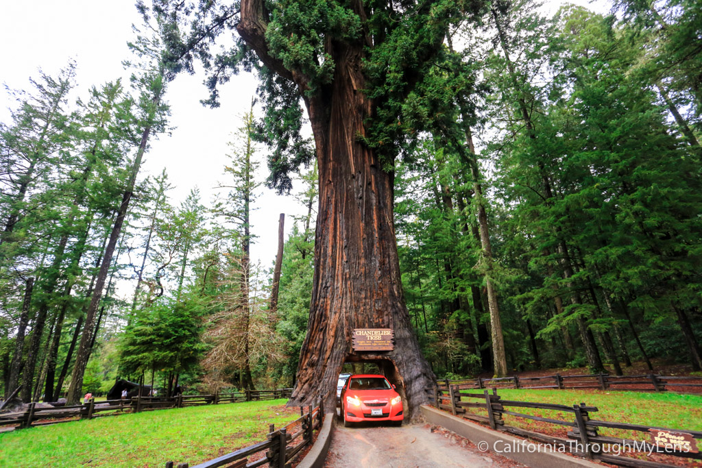 Chandelier drive thru tree in leggett california through my lens aloadofball Choice Image