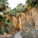 San Andres Oasis Trail: Palm Trees Near Salton Sea