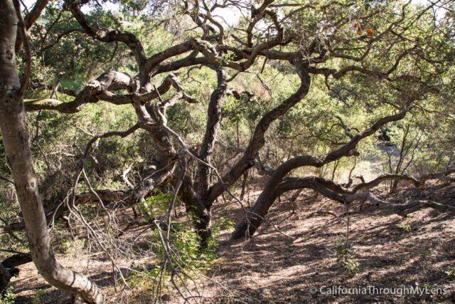 Conejo Valley Botanic Garden-4