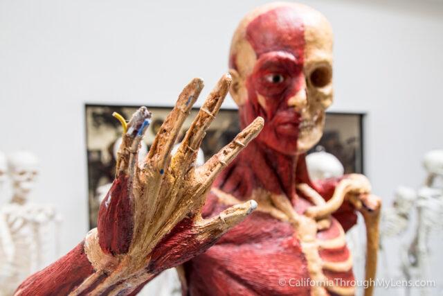 Dapper Cadaver-4