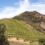 Malibu Family Wines and Safari: Feed Yaks & Zebras at a Malibu Winery
