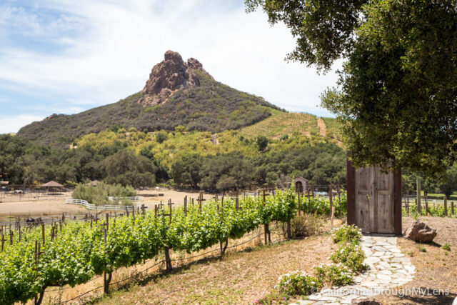 Malibu Family Wines-18