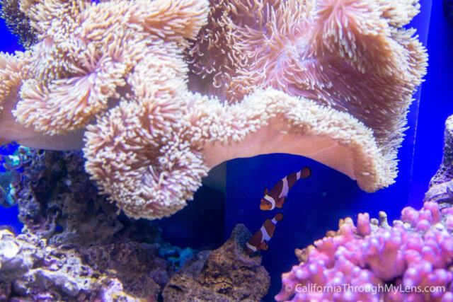 Birch Aquarium-20