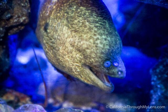 Birch Aquarium-3