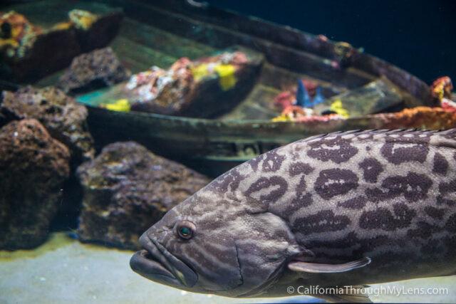Birch Aquarium-8