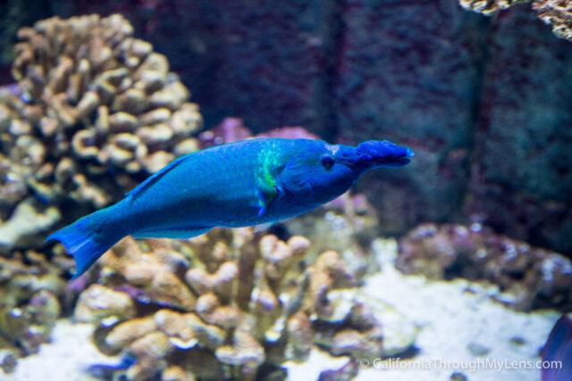 Birch Aquarium-9