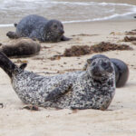Children's Pool La Jolla: The Best Spot For Seals Viewing