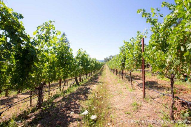 Jericho Canyon Vineyard-4
