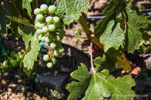 Jericho Canyon Vineyard-5