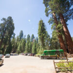 Big Trees Transit Shuttle to Kings Canyon and What to Do When There