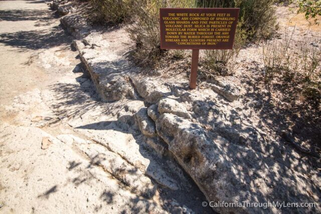 Petrified Forest-5