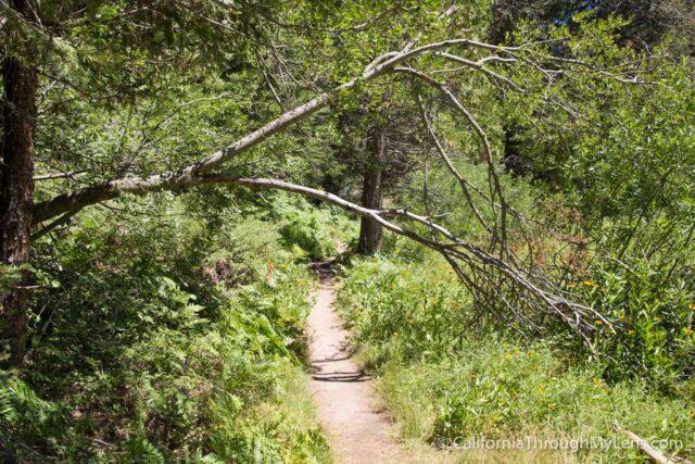 Big Stump Picnic Area-11