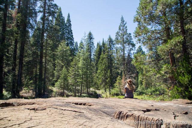 Big Stump Picnic Area-12