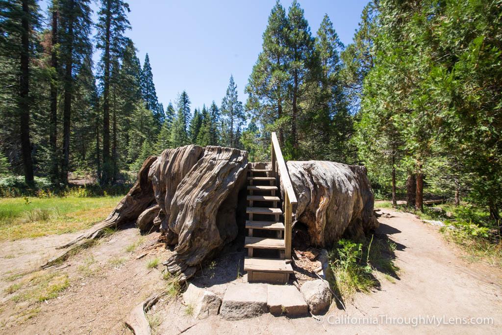 Big Stump Trail Amp Picnic Area Home Of The Mark Twain