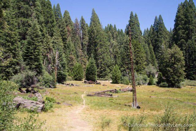 Big Stump Picnic Area-4