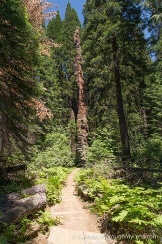 Big Stump Picnic Area-6