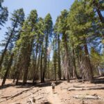 General Grant Trail & Grove: Exploring the Nations Christmas Tree in Kings Canyon National Park
