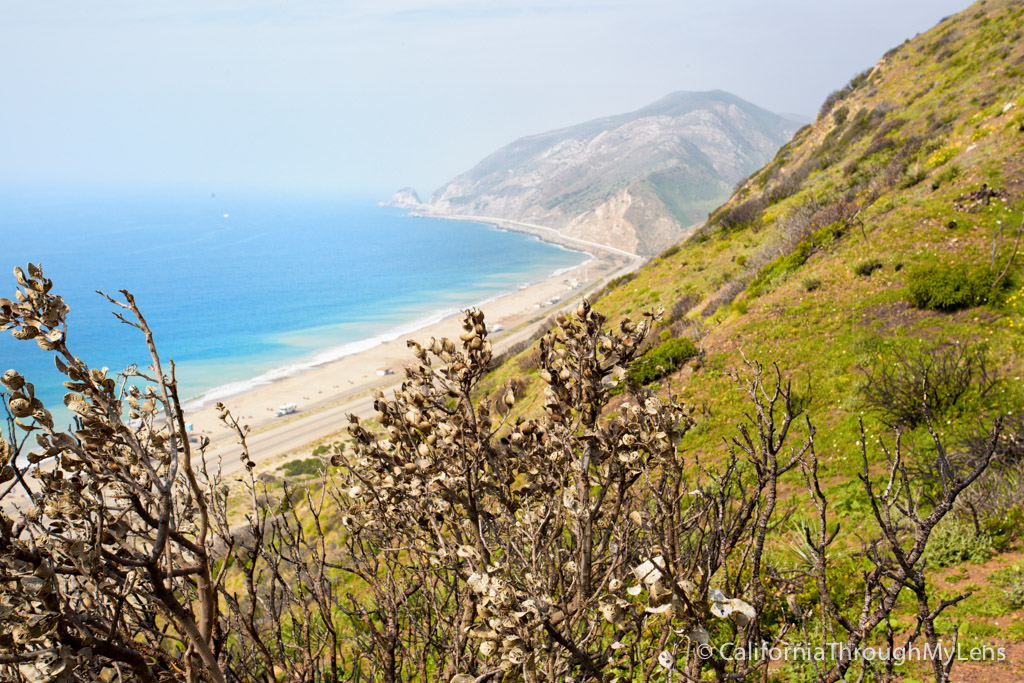 Point Mugu State Park Sycamore Canyon Scenic Trail Hike