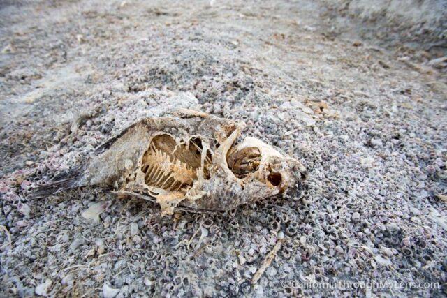 Salton Sea State Park-4