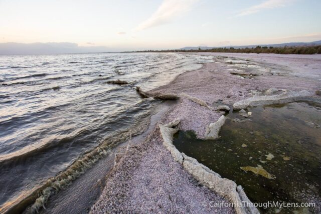 Salton Sea State Park-7