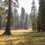 Big Trees Trail and Meadow in Sequoia National Park