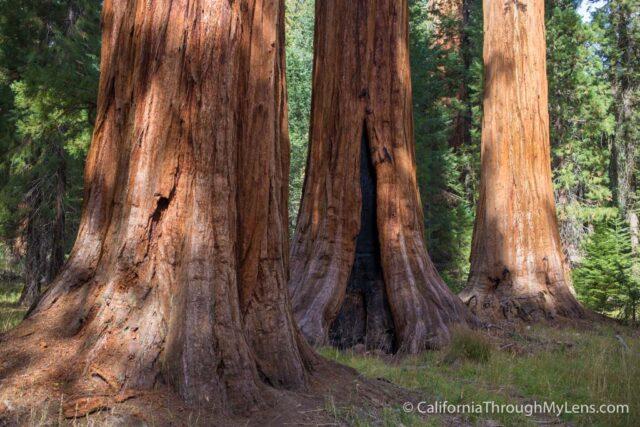 Big Trees Trail-12