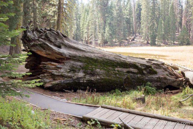 Big Trees Trail-2