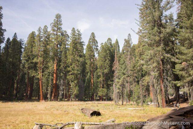 Big Trees Trail-4